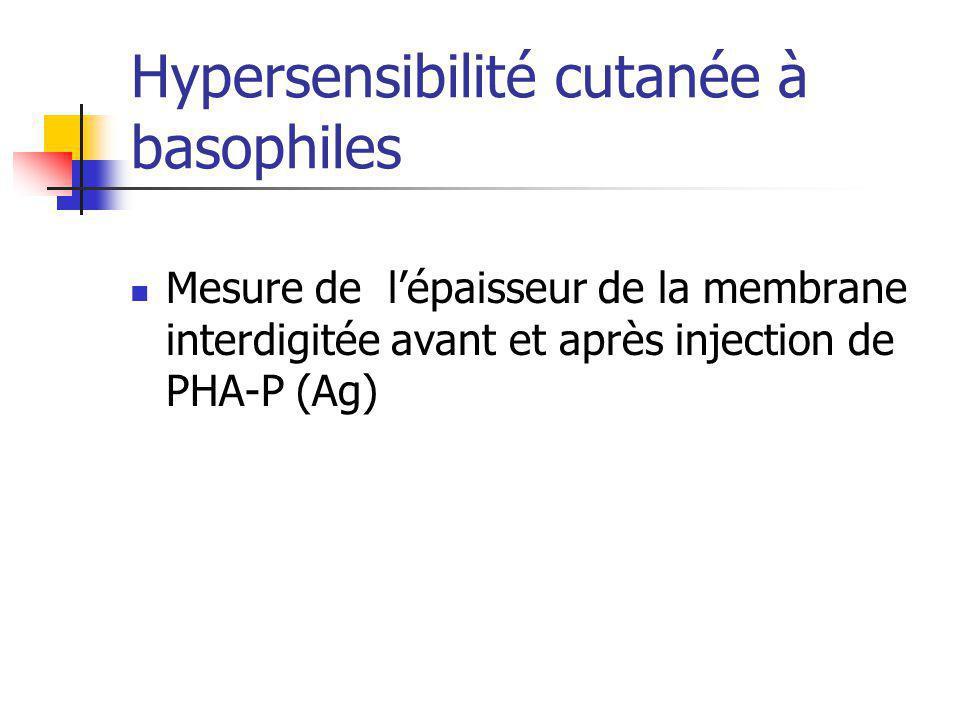 Hypersensibilité cutanée à basophiles Mesure de lépaisseur de la membrane interdigitée avant et après injection de PHA-P (Ag)