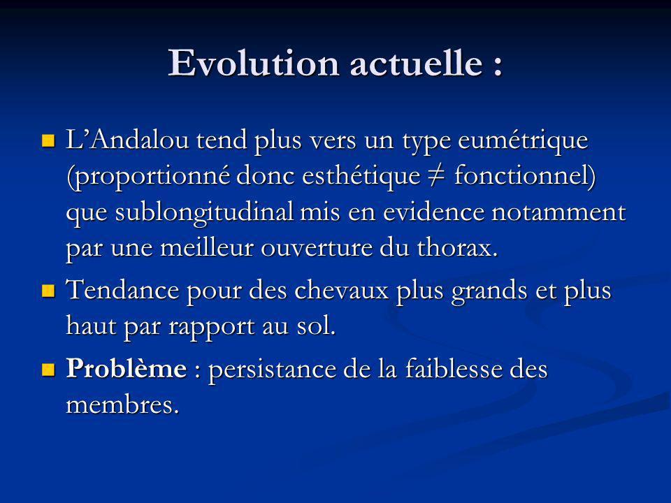 Evolution actuelle : LAndalou tend plus vers un type eumétrique (proportionné donc esthétique fonctionnel) que sublongitudinal mis en evidence notamme