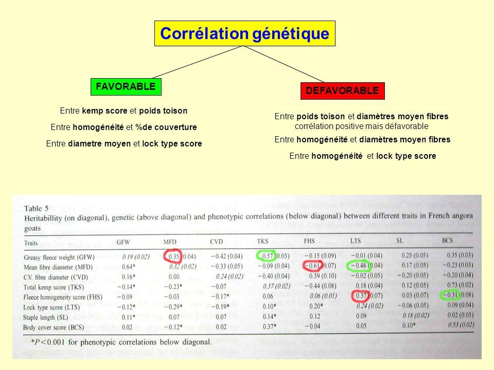 Corrélation génétique FAVORABLE DEFAVORABLE Entre poids toison et diamètres moyen fibres corrélation positive mais défavorable Entre homogénéité et di