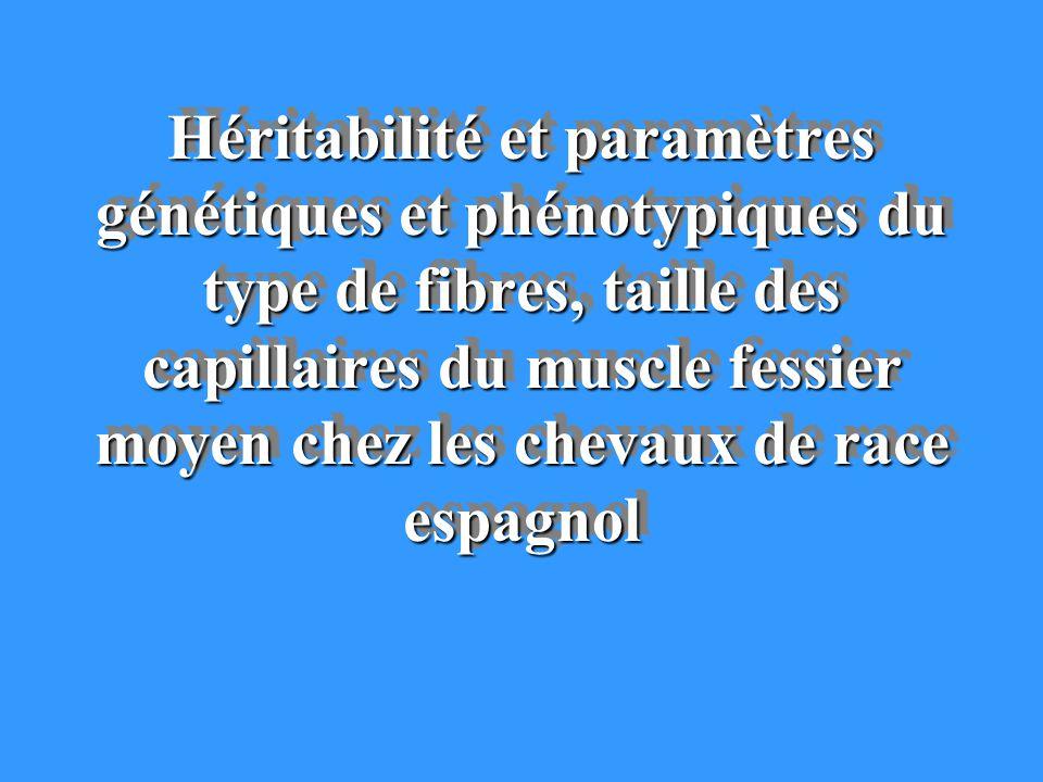 Héritabilité et paramètres génétiques et phénotypiques du type de fibres, taille des capillaires du muscle fessier moyen chez les chevaux de race espa