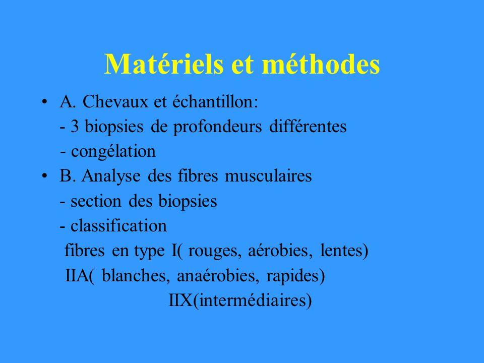 Matériels et méthodes A. Chevaux et échantillon: - 3 biopsies de profondeurs différentes - congélation B. Analyse des fibres musculaires - section des
