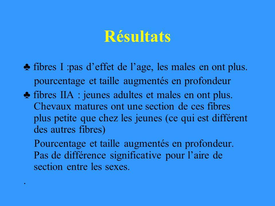 Résultats fibres I :pas deffet de lage, les males en ont plus. pourcentage et taille augmentés en profondeur fibres IIA : jeunes adultes et males en o