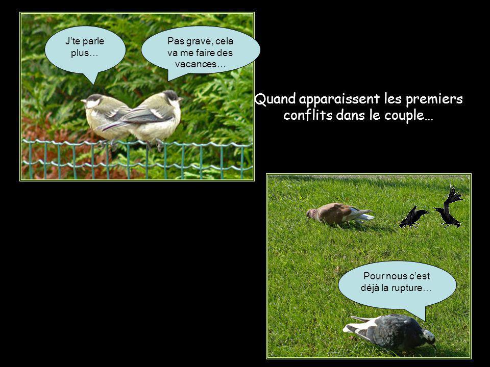 Un resto du cœur pour pigeons, mais pas de quoi se gaver, juste le minimum vital… Que faire face à un tel obstacle ?