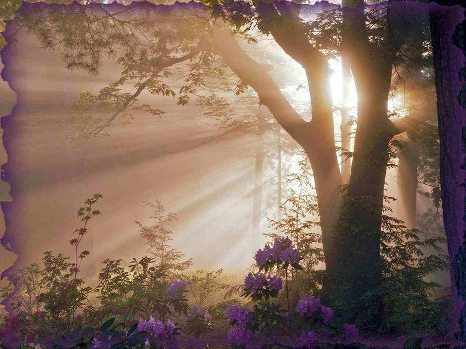 Que deviendrait le soleil si les nuages décidaient de ne jamais lui laisser de place pour filtrer ses rayons ? Si un brin d'herbe peut traverser le so
