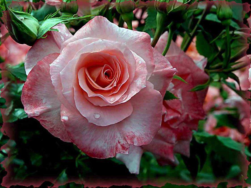 Qu arriverait-il à la plante sans les perles d eau que le nuage veut bien lui donner .