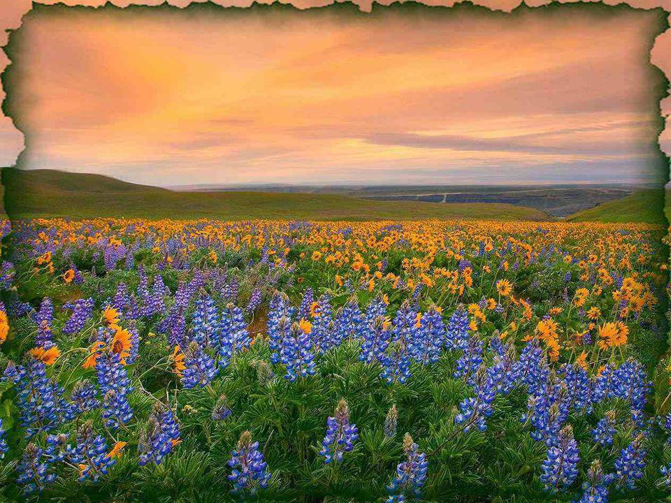 Comment les graines pourraient-elles fonder une famille sans le souffle du vent qui leur vient en aide pour faire naître de beaux bouquets multicolore