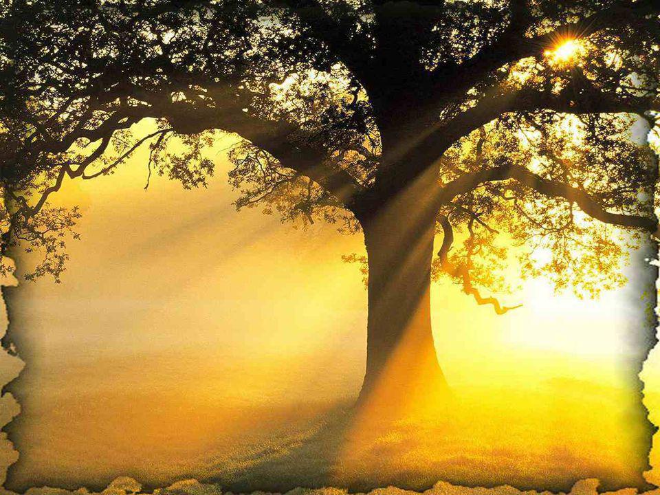 Que deviendrait l'arbre sans les rayons chauds du soleil ? Lui, qui au printemps, a tellement besoin de chaleur après avoir subi les rigueurs de l'hiv
