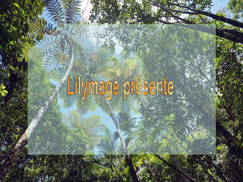 Les fougères arborescentes de Nouvelle-Calédonie sont les plus hautes du monde