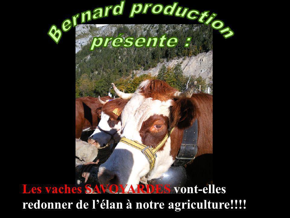 Les vaches SAVOYARDES vont-elles redonner de lélan à notre agriculture!!!!