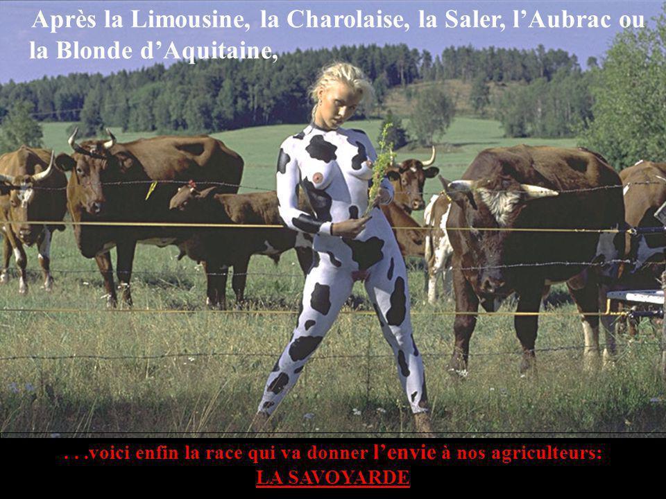 ...voici enfin la race qui va donner lenvie à nos agriculteurs: LA SAVOYARDE Après la Limousine, la Charolaise, la Saler, lAubrac ou la Blonde dAquitaine,