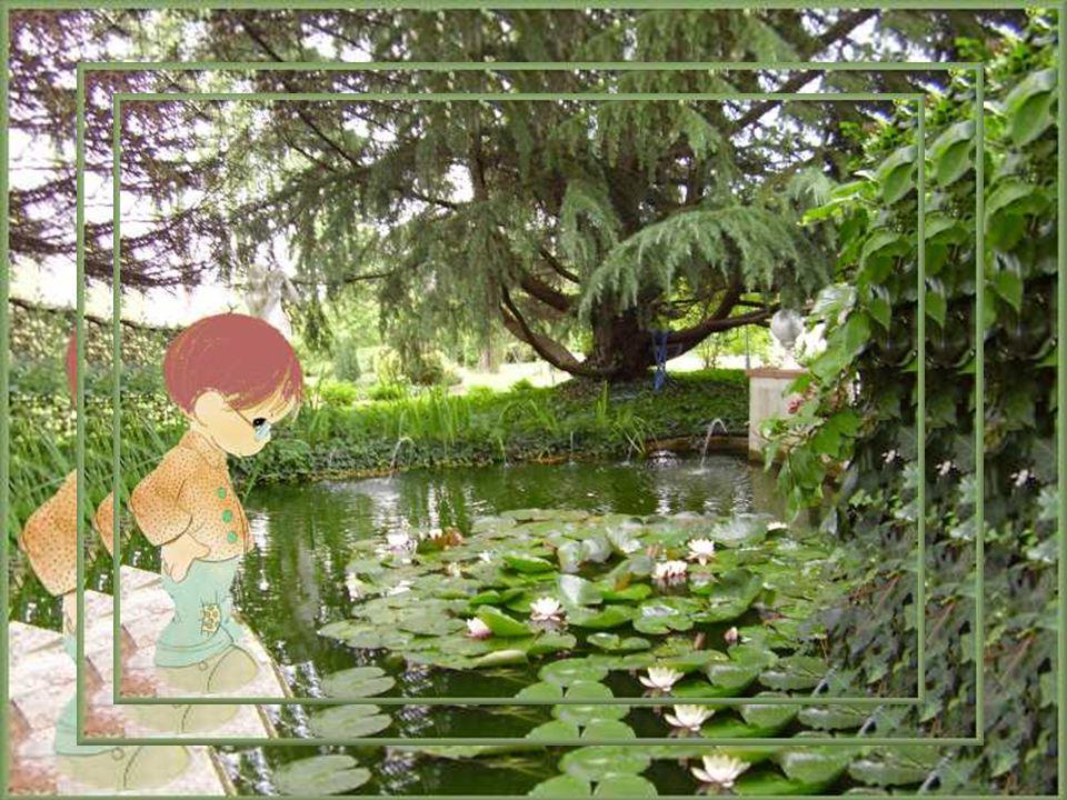 Dans le jardin de mes pensées, il y a, près du grand bassin de nénuphars, un petit bonhomme de sept ans pleurant à chaudes larmes la mort accidentelle