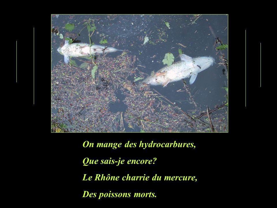 On mange des hydrocarbures, Que sais-je encore? Le Rhône charrie du mercure, Des poissons morts.