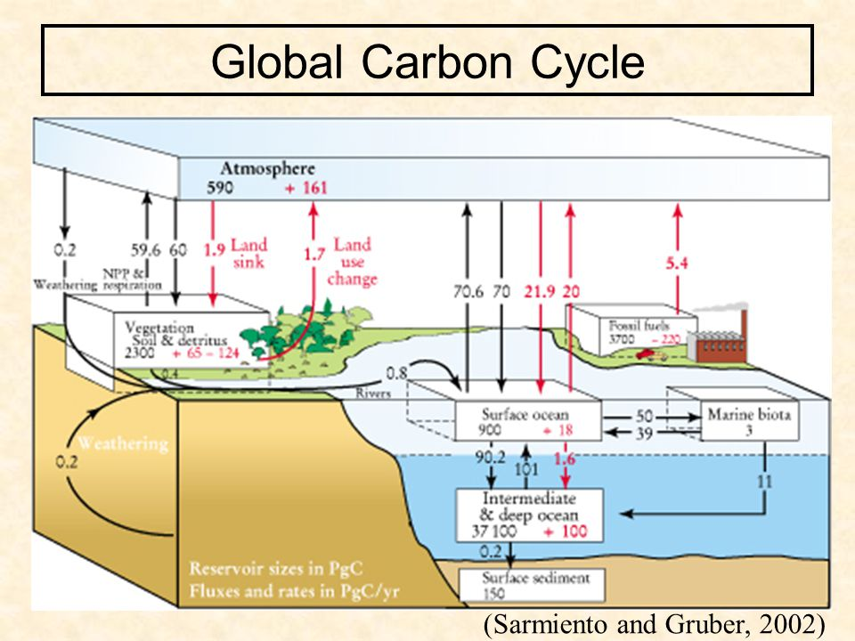(Sarmiento and Gruber, 2002) Global Carbon Cycle