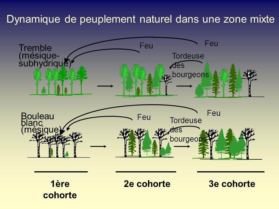 Dynamique de peuplement naturel dans une zone mixte Feu Tordeuse des bourgeons Feu 1ère cohorte 2e cohorte3e cohorte Tremble (mésique- subhydrique) Bo