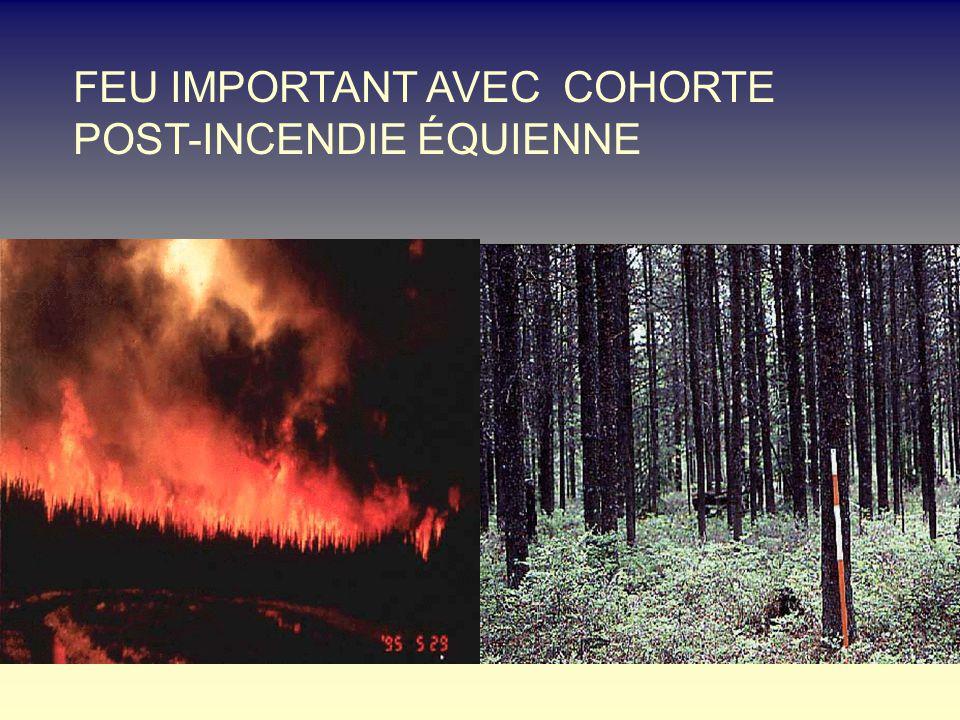 FEU IMPORTANT AVEC COHORTE POST-INCENDIE ÉQUIENNE