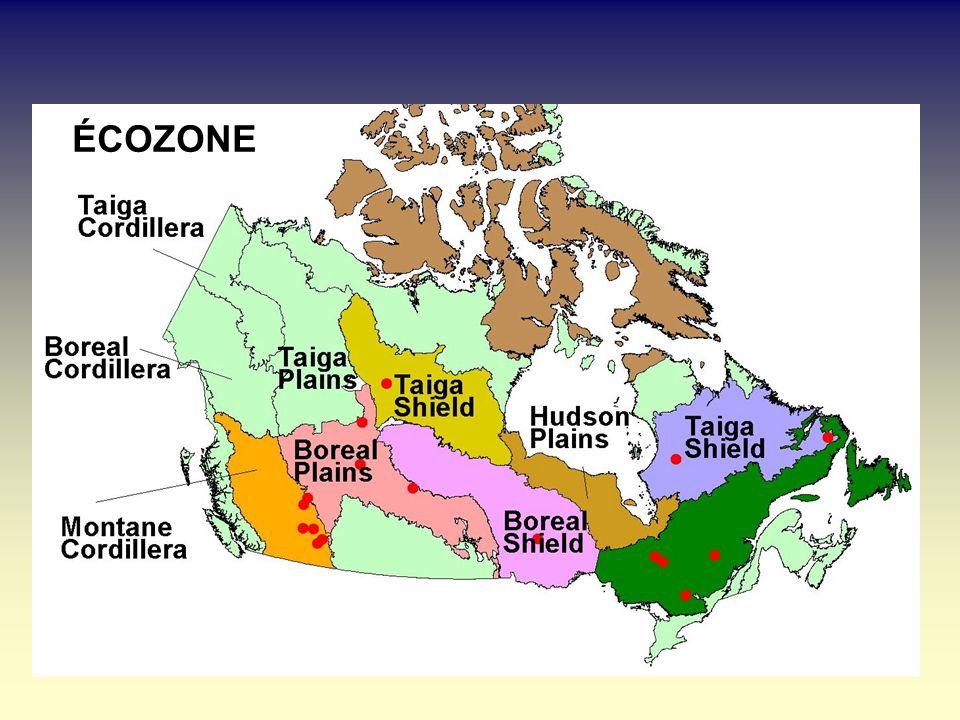 Fréquence des incendies dans la forêt boréale canadienne Taux de combustion (%) Pass é Actuel2X co23X co2 # Écozones (CCC) 14 Cordillière alpestre 0,6670,0470,000 51 Bouclier de la taïga (O) 0,8551,2021,6352,550 52 Bouclier de la taïga(E)0,6000,0580,0790,122 61 Bouclier boréal (O)1,9000,5000,6200,827 9 Plaines boréales1,0000,0660,7170,724 62 Bouclier boréal (E)0,8700,0860,1000,140