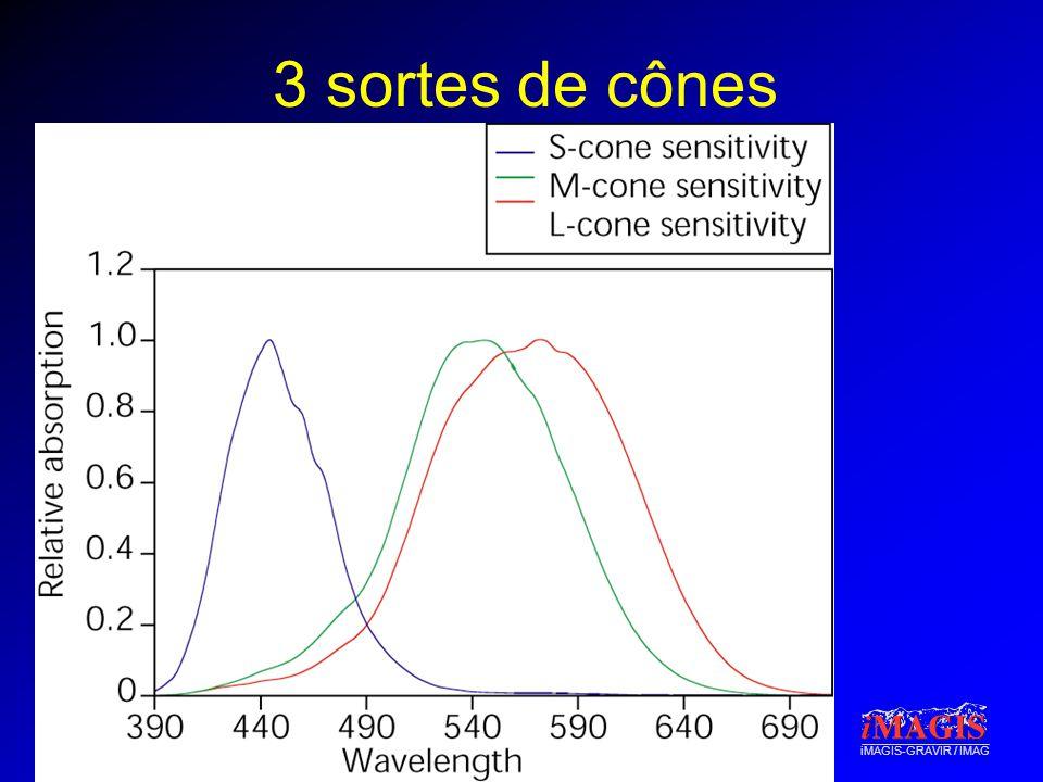 iMAGIS-GRAVIR / IMAG 3 sortes de cônes : conséquence Spectres différents, couleurs perçues comme identiques : métamères