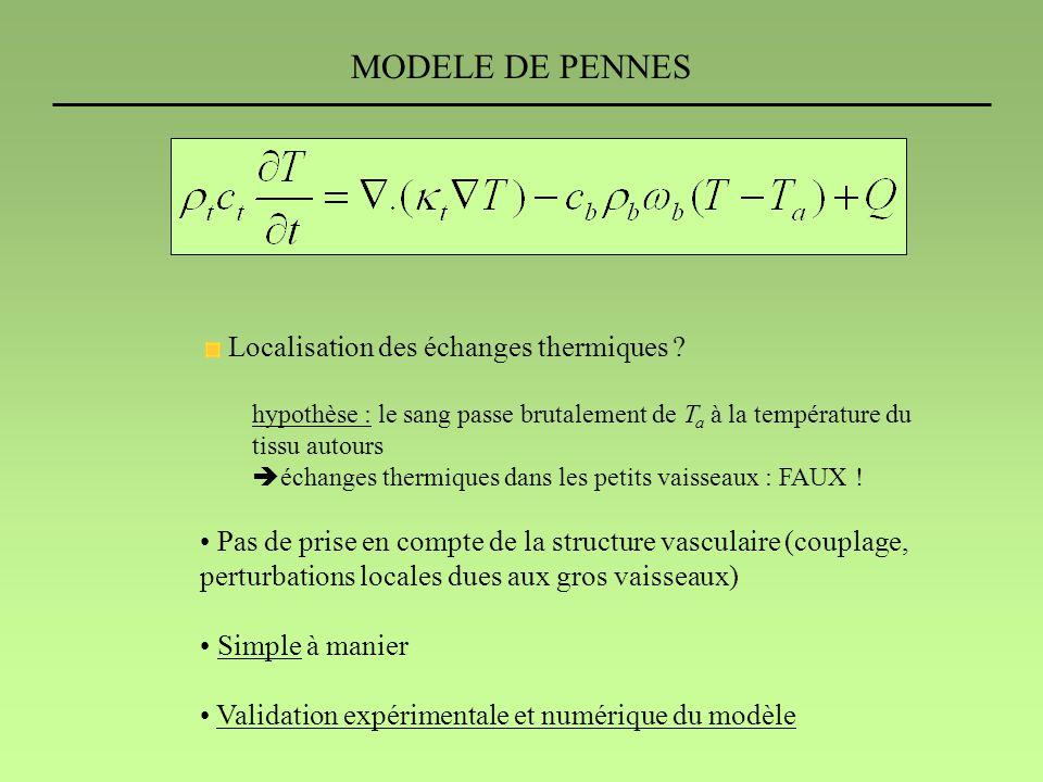 MODELE DE PENNES Localisation des échanges thermiques .