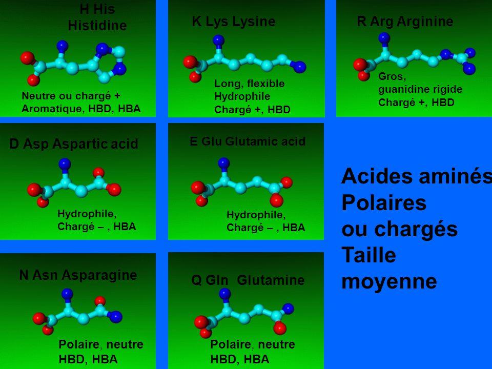 K Lys Lysine R Arg Arginine H His Histidine Neutre ou chargé + Aromatique, HBD, HBA Long, flexible Hydrophile Chargé +, HBD Gros, guanidine rigide Cha