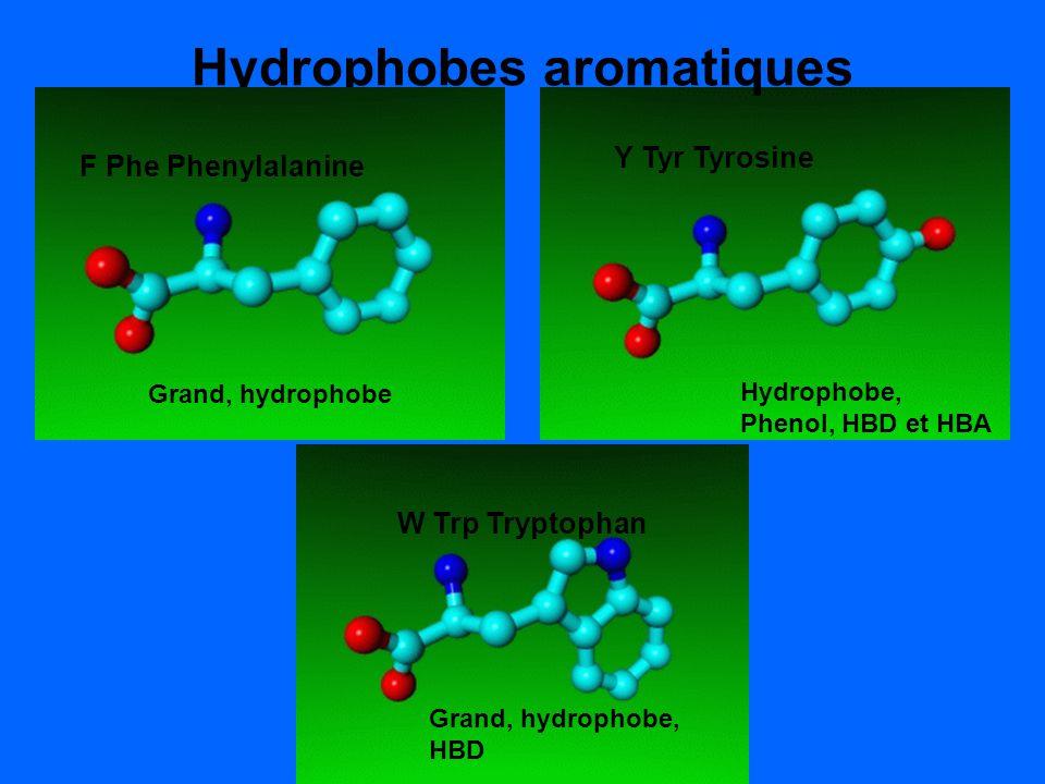 Hydrophobes aromatiques F Phe Phenylalanine Y Tyr Tyrosine Hydrophobe, Phenol, HBD et HBA F Phe Phenylalanine Grand, hydrophobe W Trp Tryptophan Grand