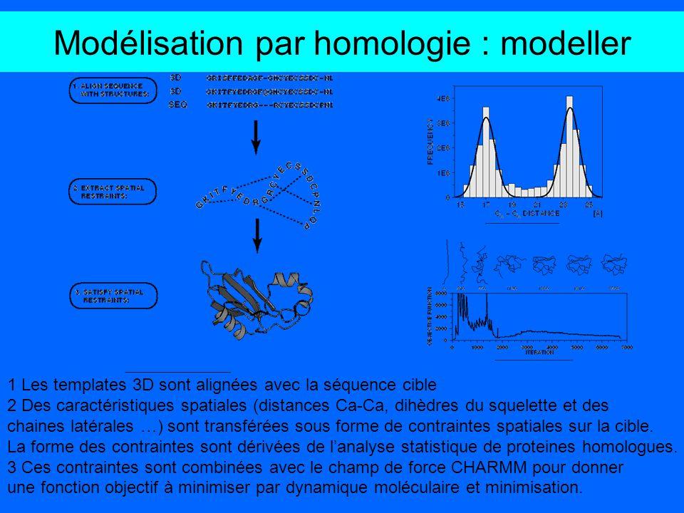 Modélisation par homologie : modeller 1 Les templates 3D sont alignées avec la séquence cible 2 Des caractéristiques spatiales (distances Ca-Ca, dihèd