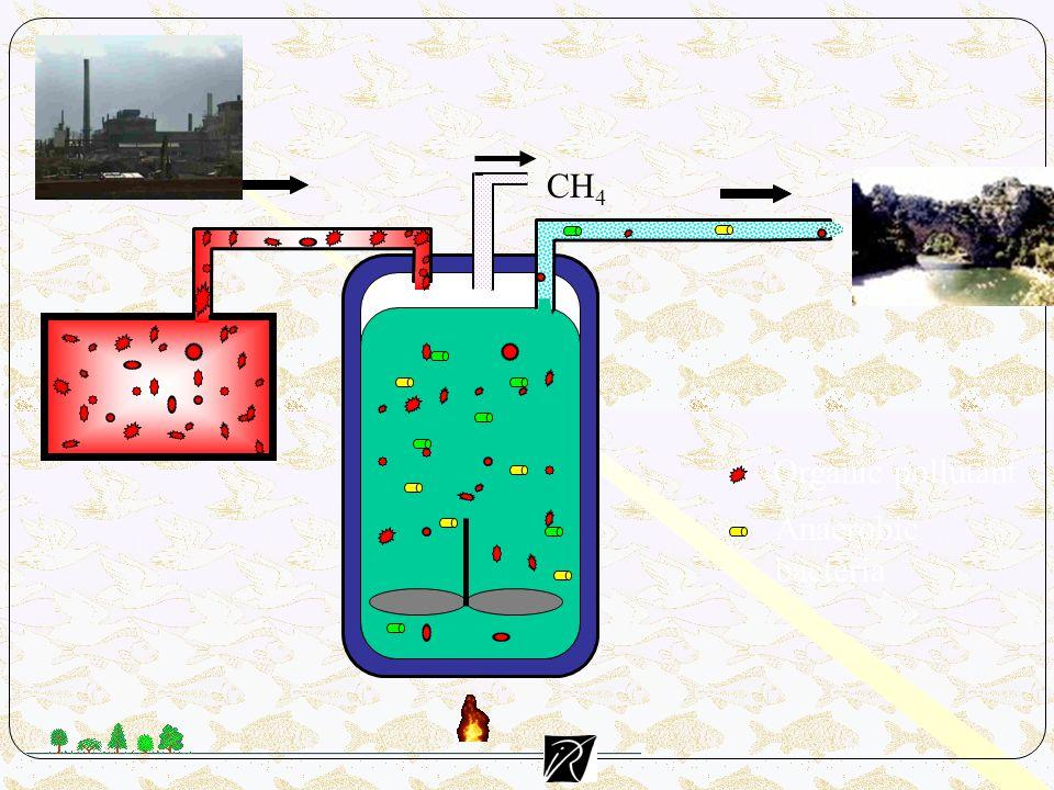 Organic pollutant Anaerobic bacteria CH 4