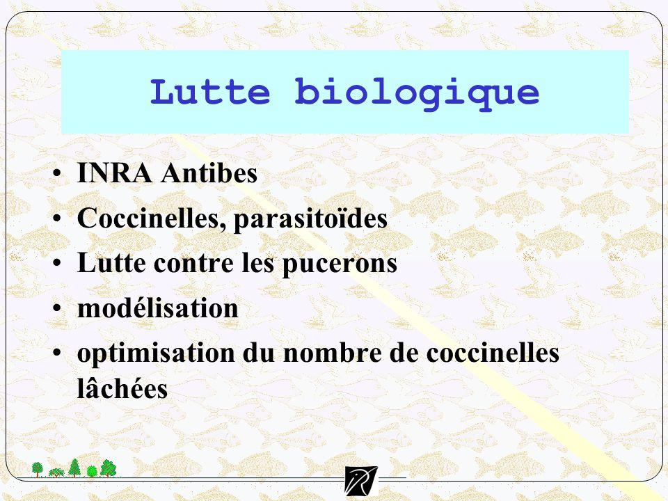 INRA Antibes Coccinelles, parasitoïdes Lutte contre les pucerons modélisation optimisation du nombre de coccinelles lâchées Lutte biologique