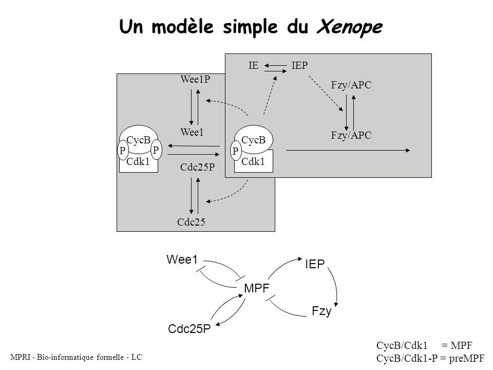 MPRI - Bio-informatique formelle - LC Un modèle simple du Xenope CycB/Cdk1 = MPF CycB/Cdk1-P = preMPF Wee1 Cdc25P Fzy/APC IEP Cdk1 CycB P Fzy/APC IE Cdc25 Wee1P Cdk1 CycB MPF Wee1 Cdc25P IEP Fzy P P