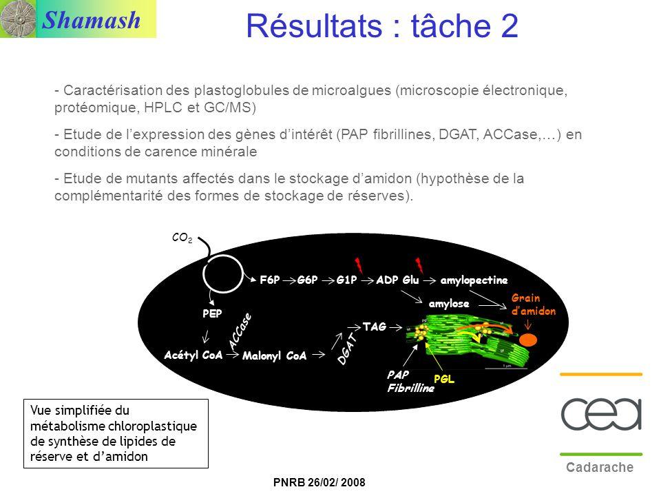 Shamash PNRB 26/02/ 2008 - Caractérisation des plastoglobules de microalgues (microscopie électronique, protéomique, HPLC et GC/MS) - Etude de lexpres