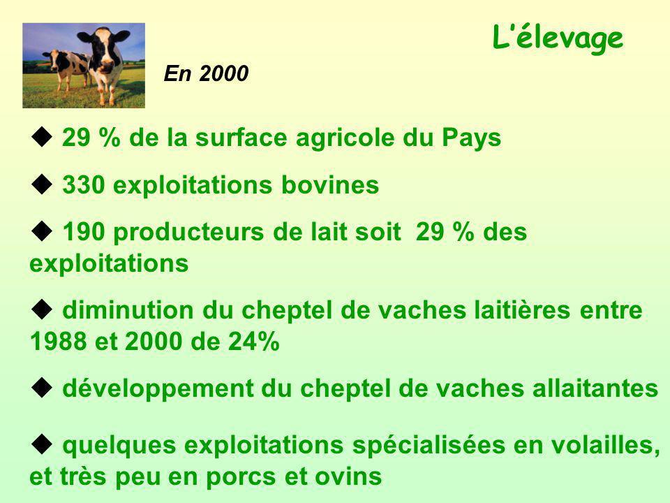 Lélevage u 29 % de la surface agricole du Pays u 330 exploitations bovines u 190 producteurs de lait soit 29 % des exploitations u diminution du chept