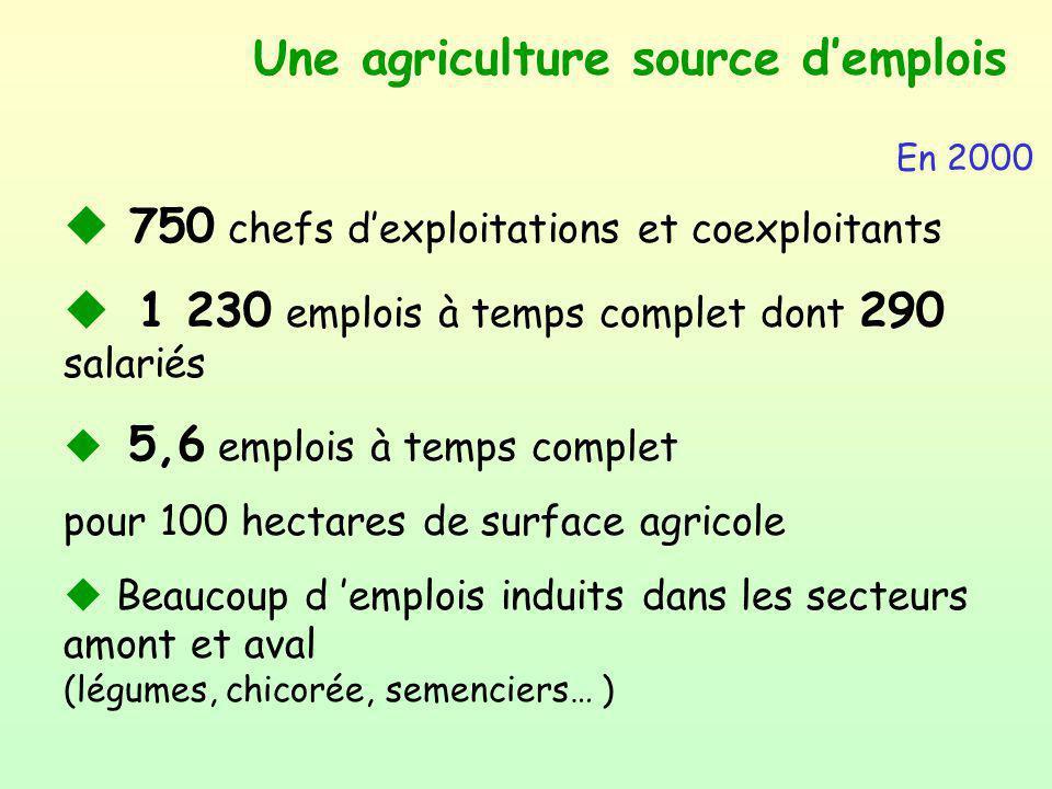 Une agriculture source demplois u 750 chefs dexploitations et coexploitants u 1 230 emplois à temps complet dont 290 salariés u 5,6 emplois à temps co