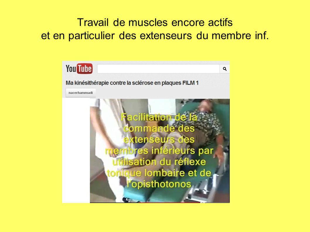 Travail de muscles encore actifs et en particulier des extenseurs du membre inf.