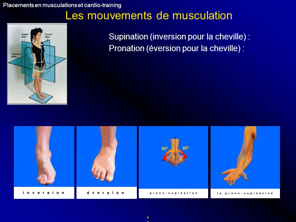 Les mouvements de musculation Placements en musculations et cardio-training +9+9 Supination (inversion pour la cheville) : Pronation (éversion pour la