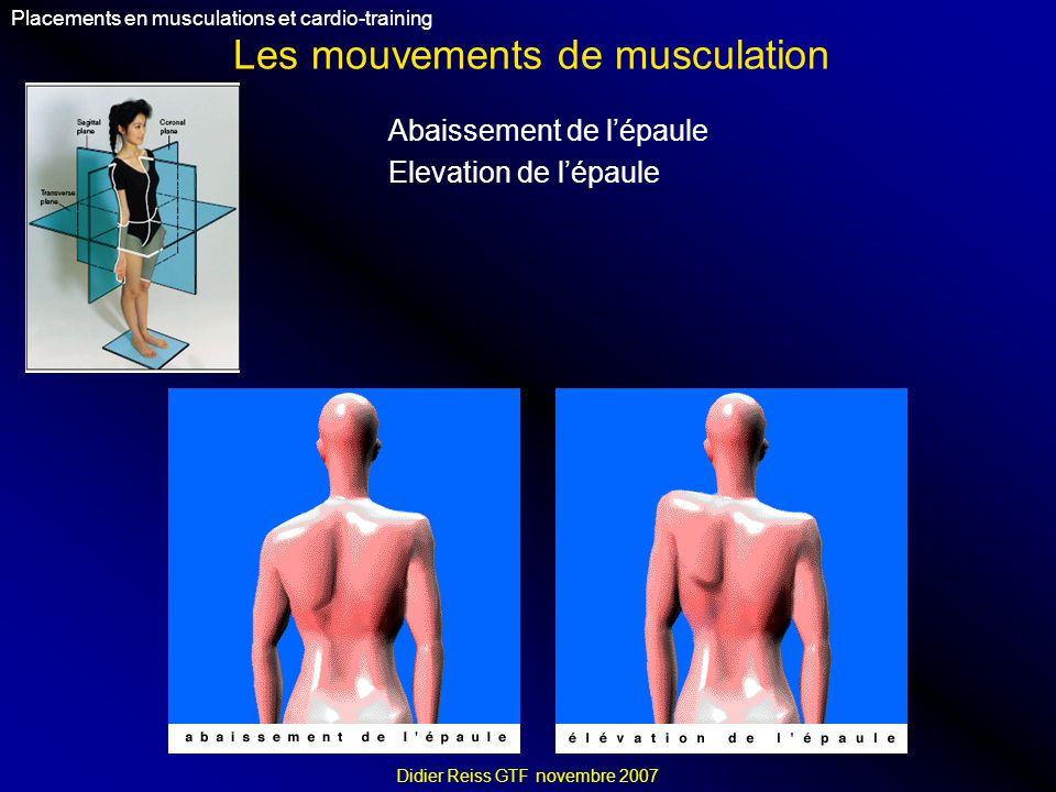 Les mouvements de musculation Placements en musculations et cardio-training Didier Reiss GTF novembre 2007 Abaissement de lépaule Elevation de lépaule