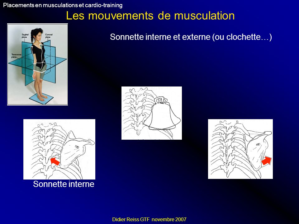 Les mouvements de musculation Placements en musculations et cardio-training Didier Reiss GTF novembre 2007 Sonnette interne et externe (ou clochette…)
