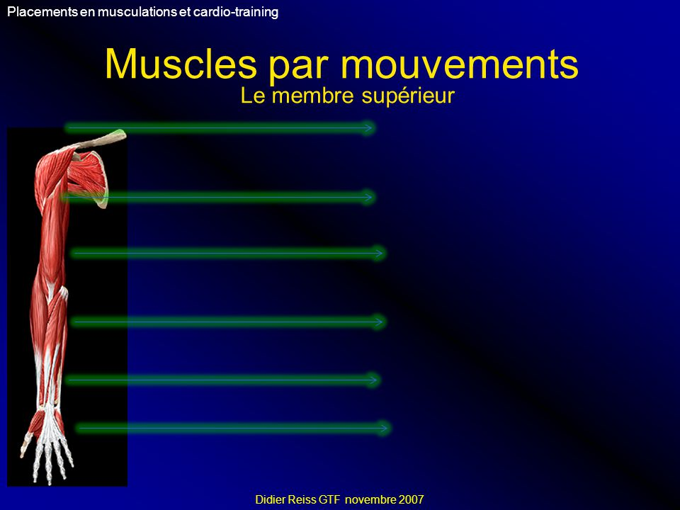 Muscles par mouvements Placements en musculations et cardio-training Didier Reiss GTF novembre 2007 Le membre supérieur
