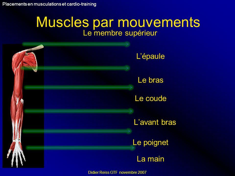 Muscles par mouvements Placements en musculations et cardio-training Didier Reiss GTF novembre 2007 Le membre supérieur Lépaule Le bras Le coude Lavant bras Le poignet La main