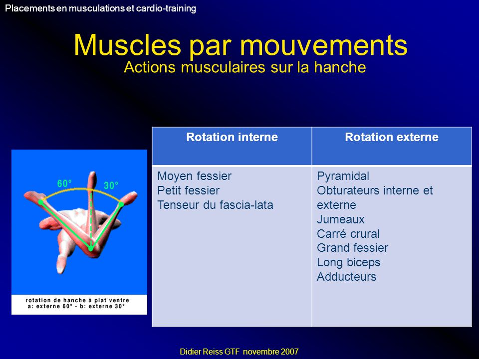 Muscles par mouvements Placements en musculations et cardio-training Didier Reiss GTF novembre 2007 Rotation interneRotation externe Moyen fessier Pet