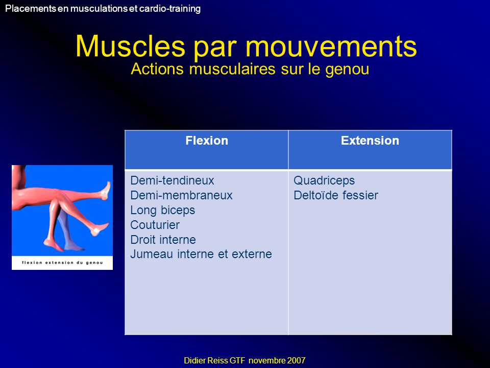 Muscles par mouvements Placements en musculations et cardio-training Didier Reiss GTF novembre 2007 FlexionExtension Demi-tendineux Demi-membraneux Lo