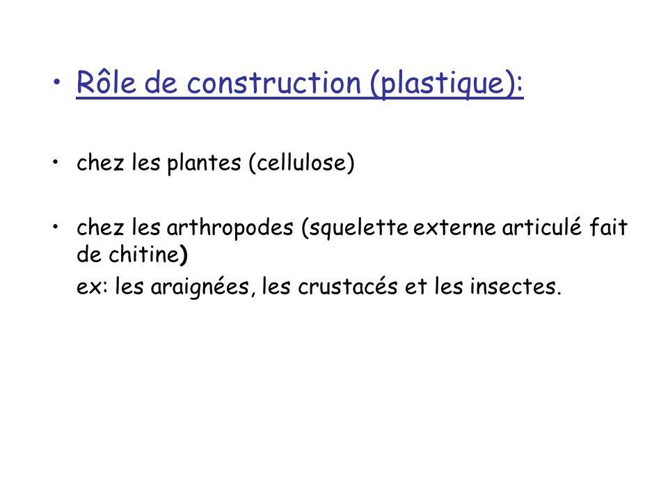 Rôle de construction (plastique): chez les plantes (cellulose) chez les arthropodes (squelette externe articulé fait de chitine) ex: les araignées, les crustacés et les insectes.