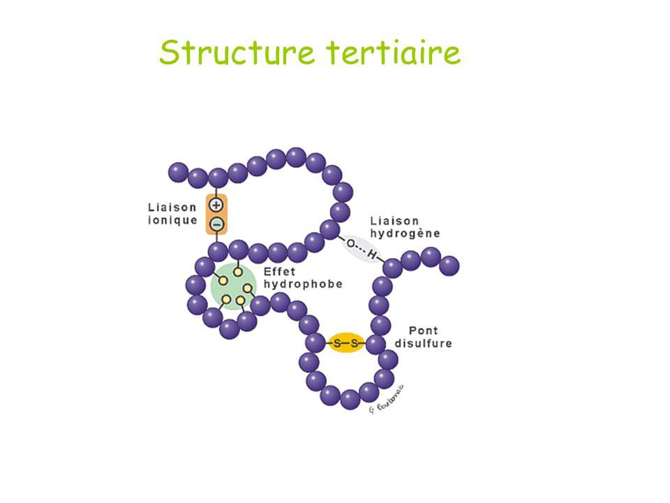 Structure tertiaire