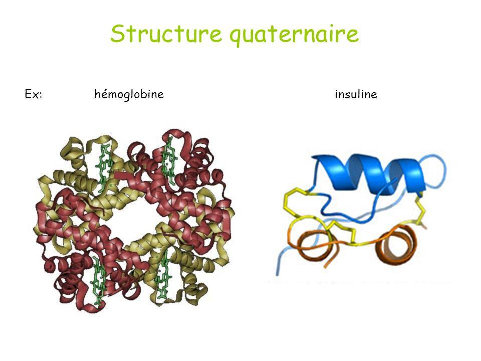 Structure quaternaire Ex: hémoglobine insuline