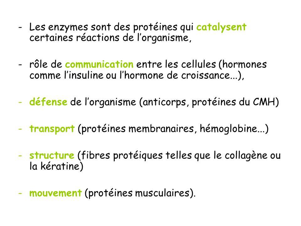 -Les enzymes sont des protéines qui catalysent certaines réactions de lorganisme, -rôle de communication entre les cellules (hormones comme linsuline ou lhormone de croissance...), -défense de lorganisme (anticorps, protéines du CMH) -transport (protéines membranaires, hémoglobine...) -structure (fibres protéiques telles que le collagène ou la kératine) -mouvement (protéines musculaires).