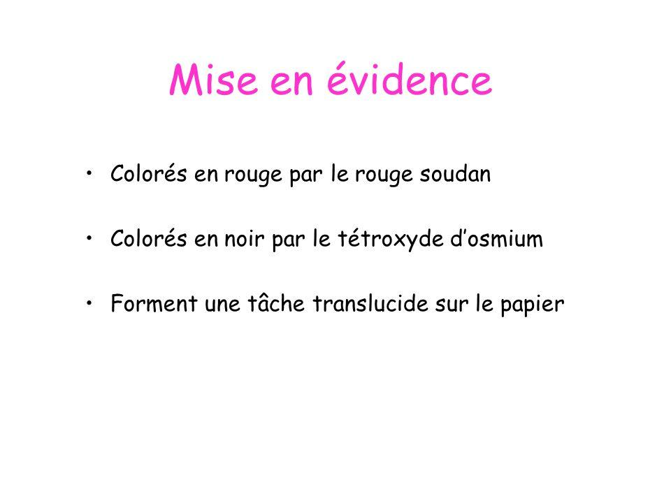 Mise en évidence Colorés en rouge par le rouge soudan Colorés en noir par le tétroxyde dosmium Forment une tâche translucide sur le papier