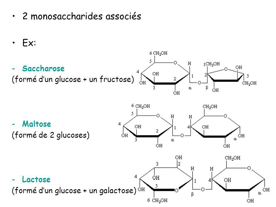 I.Les glucides 1. Structure c) les polysaccharides