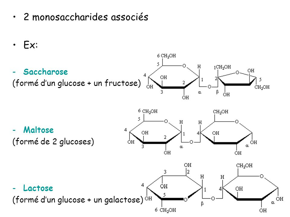 2 monosaccharides associés Ex: -Saccharose (formé dun glucose + un fructose) -Maltose (formé de 2 glucoses) -Lactose (formé dun glucose + un galactose