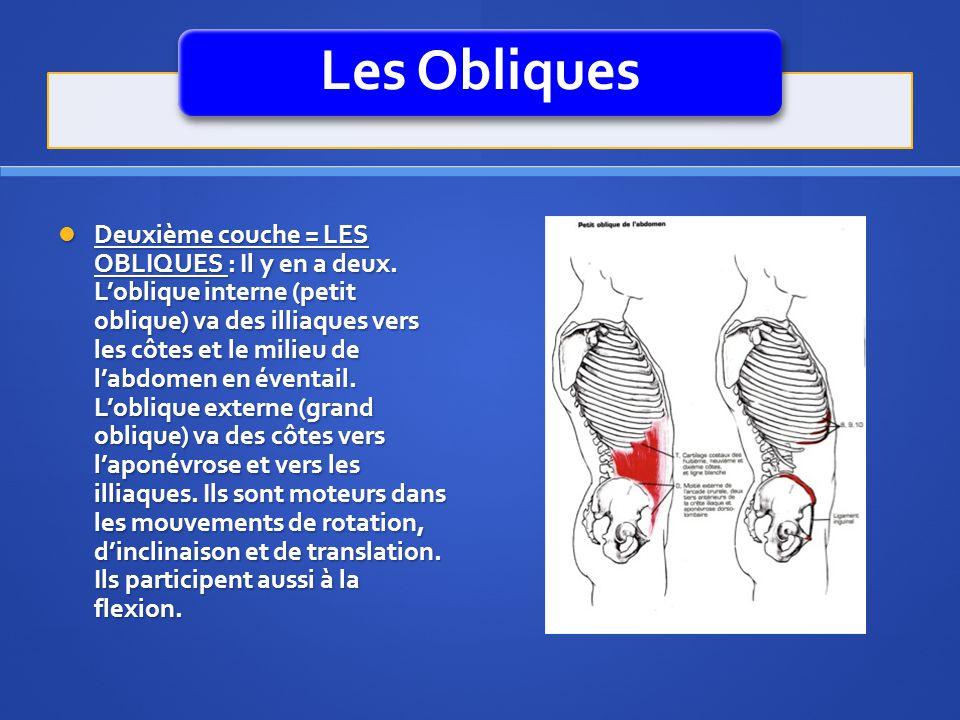 Les Obliques Deuxième couche = LES OBLIQUES : Il y en a deux. Loblique interne (petit oblique) va des illiaques vers les côtes et le milieu de labdome