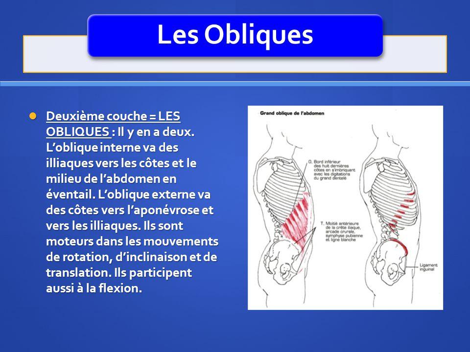Les Obliques Deuxième couche = LES OBLIQUES : Il y en a deux. Loblique interne va des illiaques vers les côtes et le milieu de labdomen en éventail. L