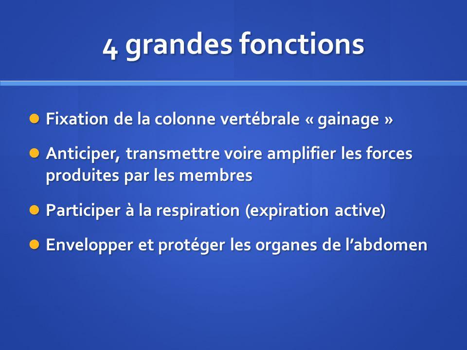 4 grandes fonctions Fixation de la colonne vertébrale « gainage » Fixation de la colonne vertébrale « gainage » Anticiper, transmettre voire amplifier