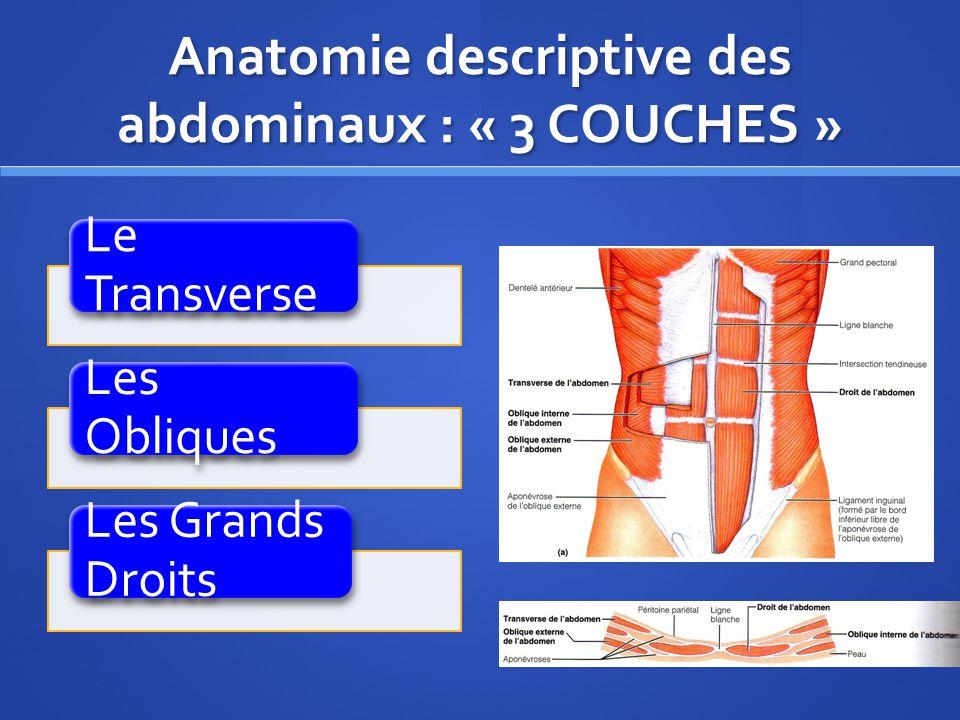 Le Transverse Première couche « la plus profonde » = le TRANSVERSE : ce muscle saccroche sur la crête illiaque, le fascia lombaire et les 6 dernières côtes.